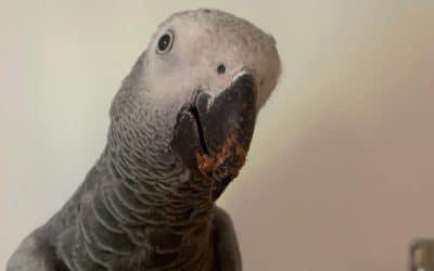 How to Prevent Problem Behaviours: Understanding Emotional Arousal in Your Bird